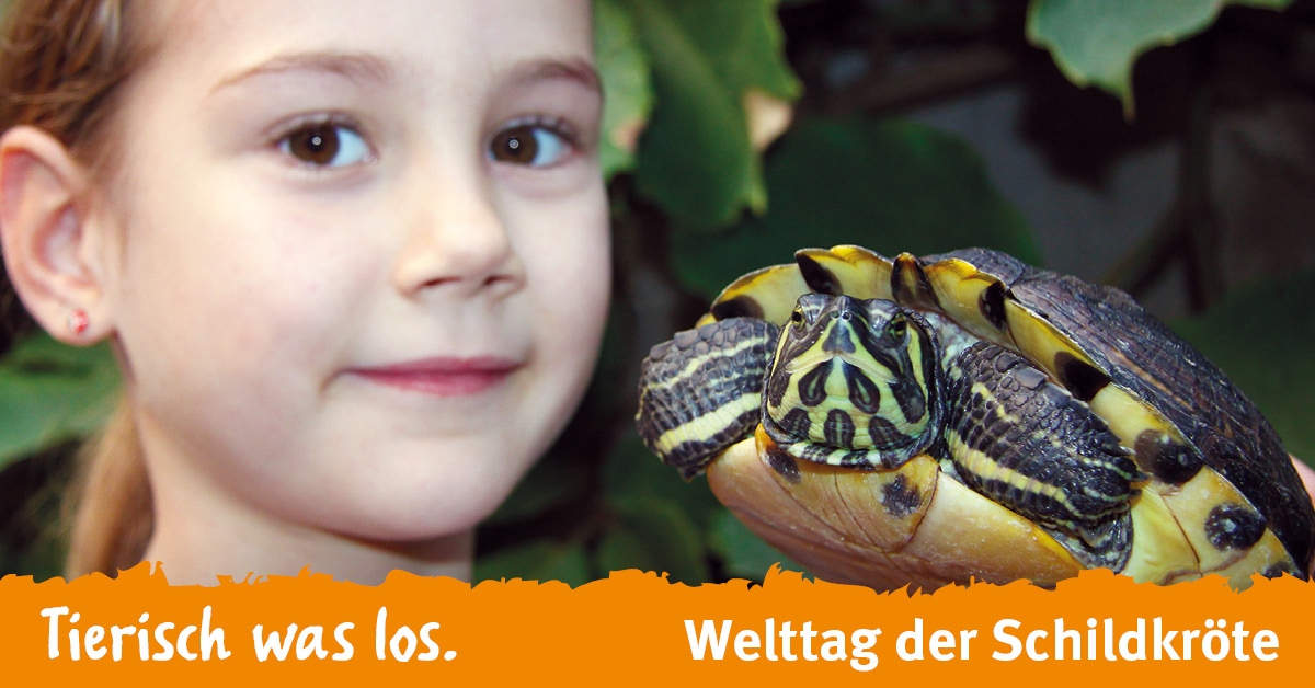 Welttag der Schildkröte